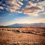 HIT-BOOKER-ADVENTURE-LIVNO-WILD-HORSES-LANDSCAPE